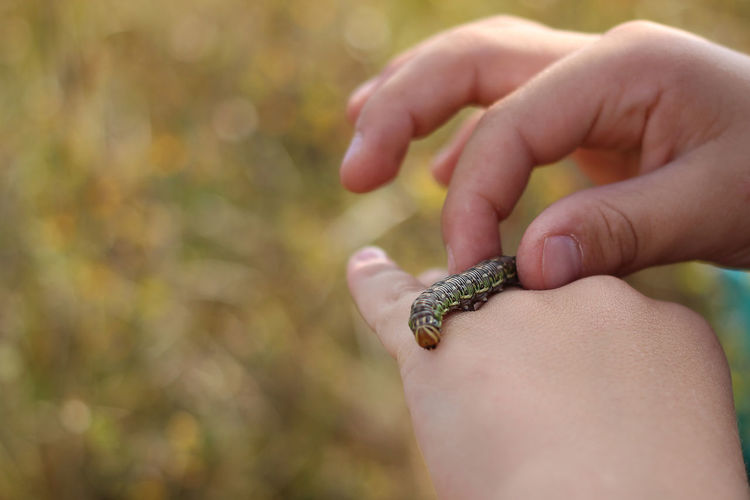 A caterpillar on a child hand. diverse environment, love and interest in nature