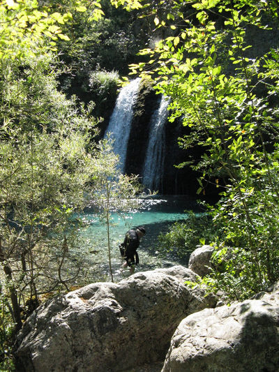 Beauty In Nature Lake Of Fairies Nature Shining Sunlight Trees Water Flowers Waterfall Waiting Game