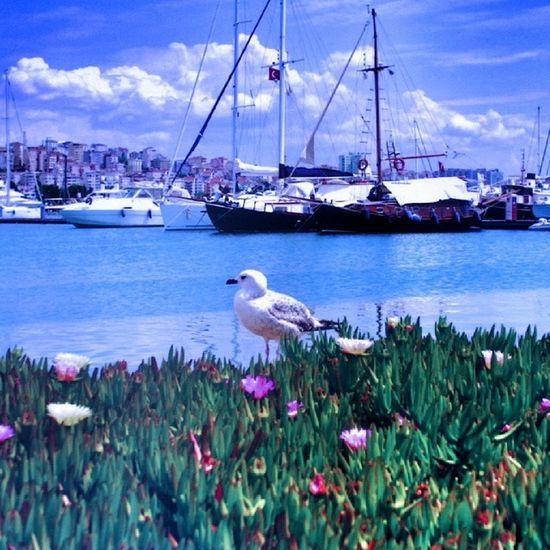 Martılar hoş geldin diyor Denizde gemiler kuğu gibi süzülüyor Günesin doğuşunu seyrediyorum Denizin saf duruluğunda İstanbul uyanıyor icimdekı sevgi gibi Martıların uçuşu kalbimi aydınlatıyor Çığlıkları sana olan sevgimi haykırıyor İstanbul aşıklar şehri bizi kucaklıyor ..