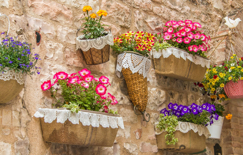 Wall in the medieval center of Spello with pots of flowers Spello Umbria Medieval Architecture Italy Flowers,Plants & Garden Flowers Nature Medieval Architecture Cityscape Borghi D'Italia Travel Destinations Travel Traveling Travel Photography Travelling Historic Wall Stone Blooming Bloom Blooming Flower Surfinia Petunia Colors Flowering Plant Flower Plant Freshness Wall - Building Feature No People Potted Plant Beauty In Nature Basket Fragility Vulnerability  Growth Day Variation Bouquet Flower Arrangement Close-up Container Multi Colored Flower Head Stone Wall
