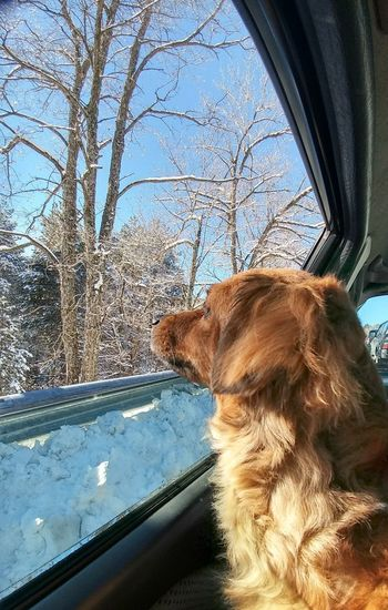 Dog Pets Window One Animal Day Animal Themes Looking Through Window Car Outdoors Sky Nature Winter Snow Let's Go. Together.