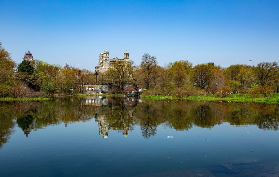 Central Park Reflection New York Photooftheday EyeEm Best Shots Water Tree Sky Reflection Plant Lake Clear Sky Tranquil Scene
