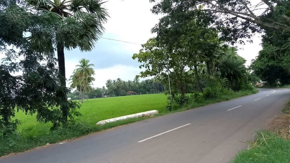 Beautiful evening.... Andhrapradesh Greenery Go For Green 💚 Landscape Nature Evening Mobile Shots Andhra God's Beauty Travel Destinations No People Moto Sky Trying New Things Lost In The Landscape Mobilephotography Todays Shot Today :) Coconut Trees Beautiful View ❤ God Is Great.