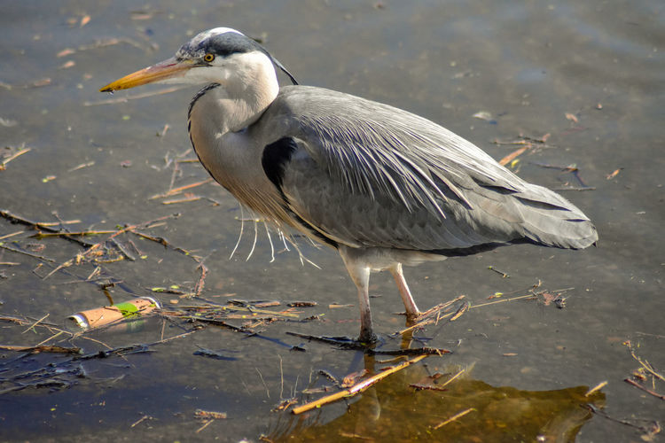 Sad how people destroy nature! Bird Animal Wildlife Animal Themes Vertebrate Animal Animals In The Wild One Animal Water Lake Water Bird No People Nature Beak Heron Day Focus On Foreground Perching Outdoors Side View Seagull My Best Photo British Culture