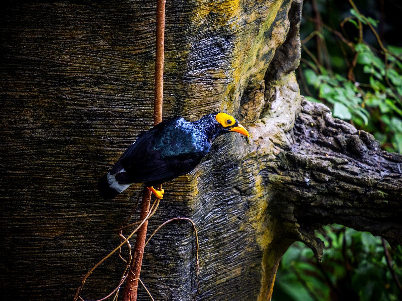 Close-Up Of Bird Perching On Twig By Tree