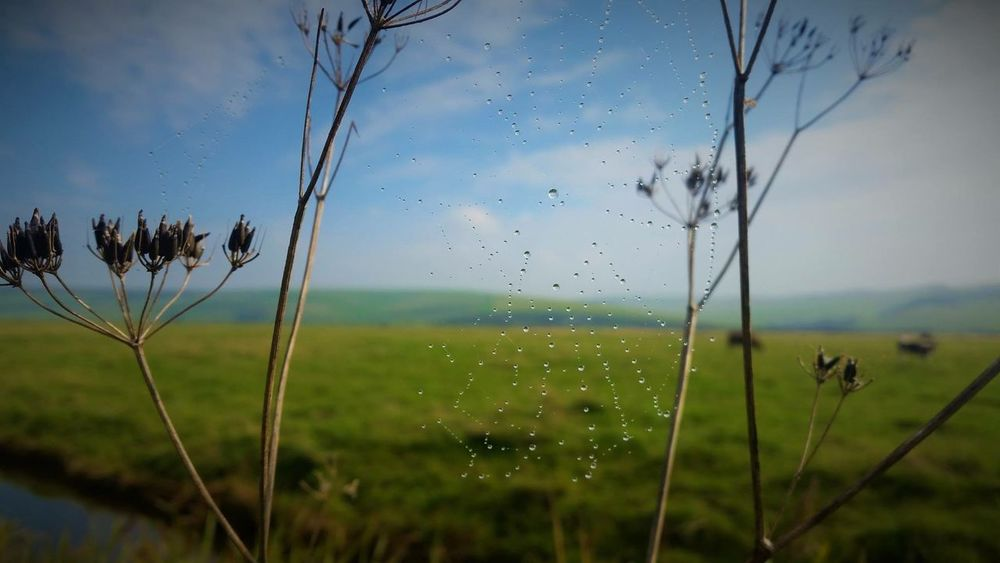 #England #sevensisters #spiderweb Beauty In Nature Close-up Day Drop Focus On Foreground Fragility Freshness Grass Growth Leaf Nature No People Outdoors Plant RainDrop Sky Spraying Tree Water Wet
