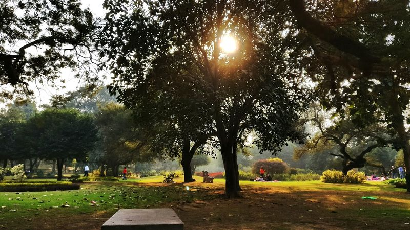 A photo in New Delhi, India garden......Tree Nature Outdoors Beauty In Nature Scenics Sky Day Travel Destinations Family Cold Days Family Time Newdelhi Winterscapes Winter Landscape Garden Photography Gardens Garden Shots! Bench Benches & Branches sunset sun clouds skylovers sky nature beautifulinnature naturalbeauty photography landscape