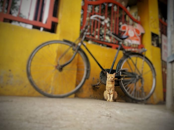 An observer of street moment Cat 😚 Cycle Brown Meuscat Meuscapture Streetphotography Jounery Adventures Letsstartadventures Travel Bangalore EyeEmNewHere City Pedal Bicycle Rack Stationary Bicycle Tire Land Vehicle Cycling Wheel 10