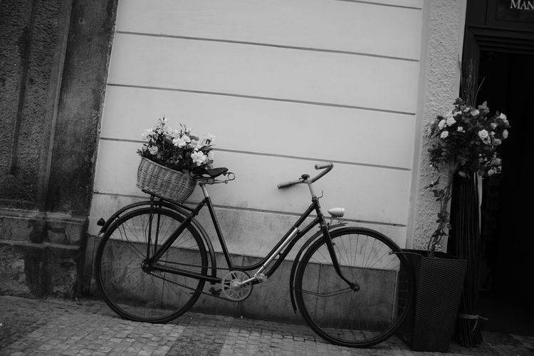 Architecture Basket Bicycle Bicycle Basket Building Exterior Built Structure Day Flower Flowering Plant Growth Land Vehicle Mode Of Transportation Nature No People Outdoors Parking Plant Stationary Transportation Wall - Building Feature