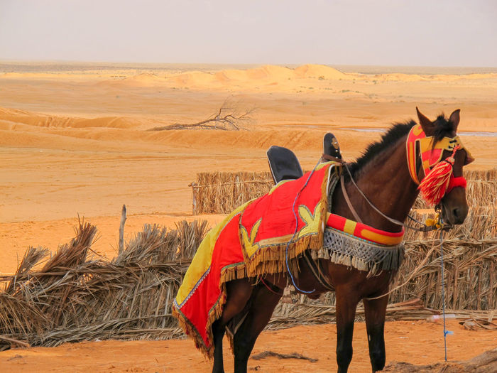 Tunisia travel holidays horse Nature Pets Sky Animal Landscape Horse Day Field Outdoors Livestock Domestic Land Climate Mammal No People Herbivorous Working Animal Animal Themes One Animal Animal Wildlife Domestic Animals Arid Climate Vertebrate