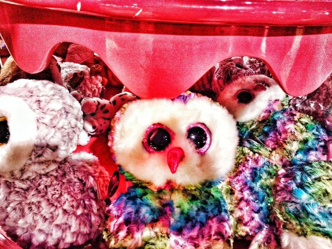 MYSTERIOUS OWL Owl Toy Red Looking At Camera Close-up Toy Animal Stuffed Toy Teddy Bear Pit Bull Terrier Animal Representation Adhesive Bandage Pet Bed Terrier Canine Crib Pets Pet Collar