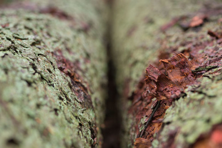 Selective Focus Plant Tree Trunk Close-up Tree Trunk No People Textured  Full Frame Nature Backgrounds Moss Day Plant Bark Growth Food Outdoors Rough Food And Drink Wood - Material Bark Abstract Backgrounds Natural Condition Lichen Textured Effect