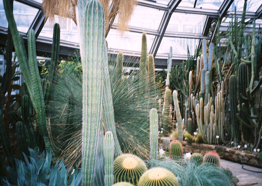 Cactus Botanical Gardens 35mm Film Analogue Photography Filmisnotdead Fieldtrip Staybrokeshootfilm Location Scouting