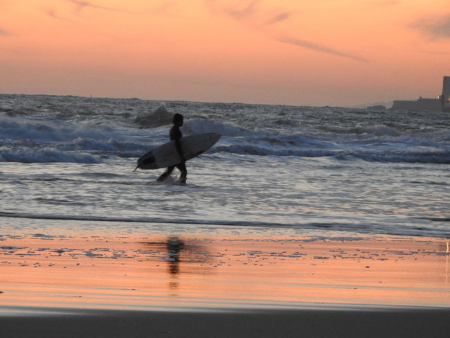 Dogs Beach Beauty In Nature Chiens Day Extreme Sports Geoland Horizon Over Water Men Motion Mouette Nature One Person Orange Color Outdoors People Real People Sand Scenics Sea Seagal Silhouette Skill  Sky Sunset Surf Board Water Wave