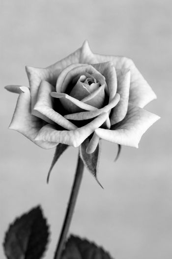 Flowers Black And White Photo Flowerpower