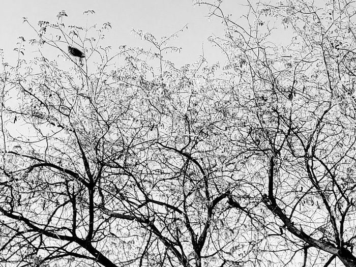 Tree Tree Photography Tree_collection  Nature Nature Photography Nature Collection Beauty Of Nature Tree View Bird Bird On The Tree Bird On A Tree Bird On Tree Bird And Tree Tree And Bird Black And White Black And White Photography Black And White Collection  Black And White Tree
