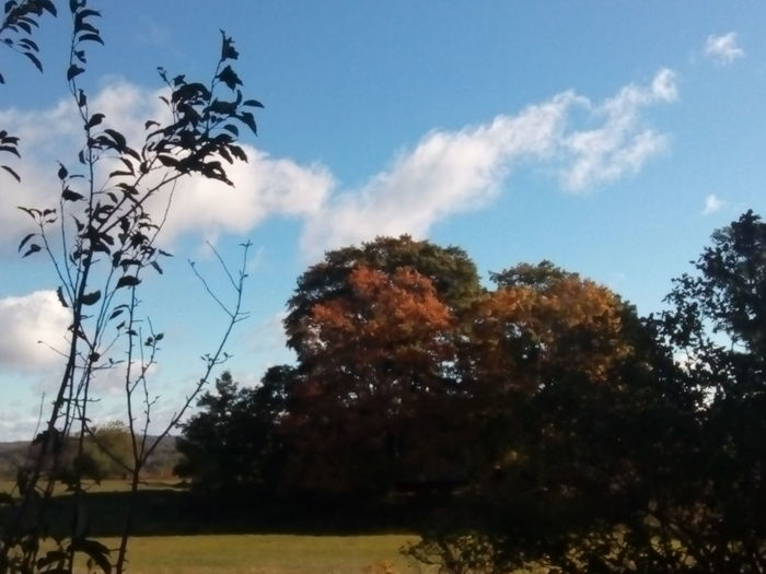 Tree Sky Low Angle View Nature Beauty In Nature Cloud - Sky Day Orange Color Outdoors