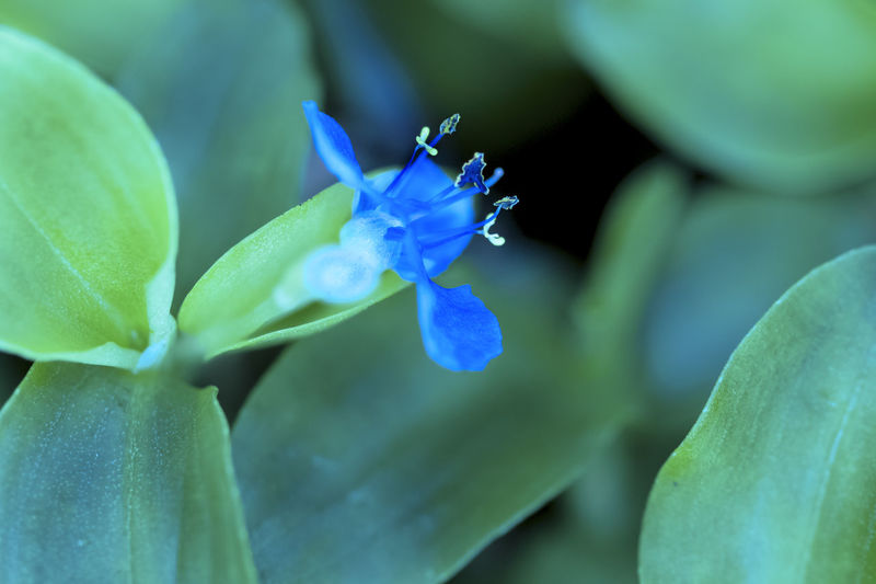 Beauty In Nature Blue Calming Close-up Dramatic Dynamic Flower Fragility Leaf Nature Petal Serene