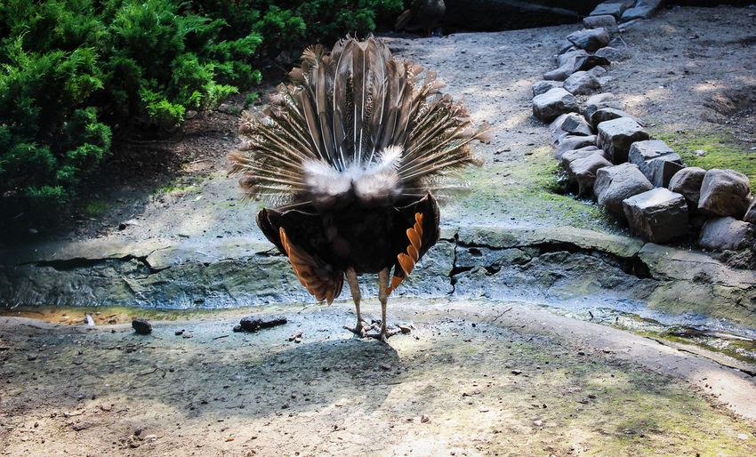 Animal Themes Animal Wildlife Animals In The Wild Beauty In Nature Bird Day Field Nature No People One Animal Outdoors Rock - Object Spread Wings Zoo