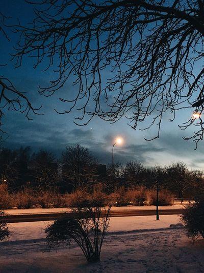 Moody dusk Tree
