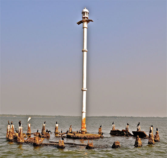 Birds Lighthouse Meeting Reunion  Round Table Sea Tranquility Water