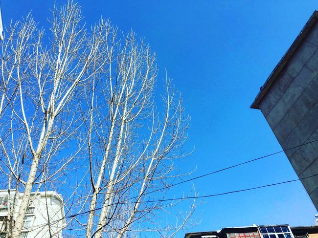 Low Angle View Building Exterior Built Structure Blue Architecture Clear Sky No People Outdoors Day Bare Tree Sunlight Sky Winter First Eyeem Photo