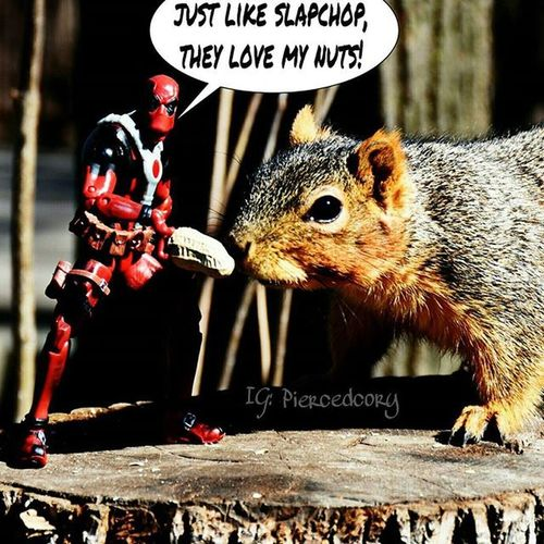 Hi, I'm Deadpool for slapchop! Tga_bondbetweenbrothers Tcb_spineshank Deadpool Funwiththesquirrels Luckywiththeanimals Toyhumor