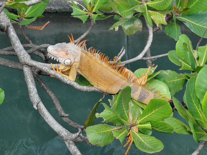 High angle view of lizard on plant