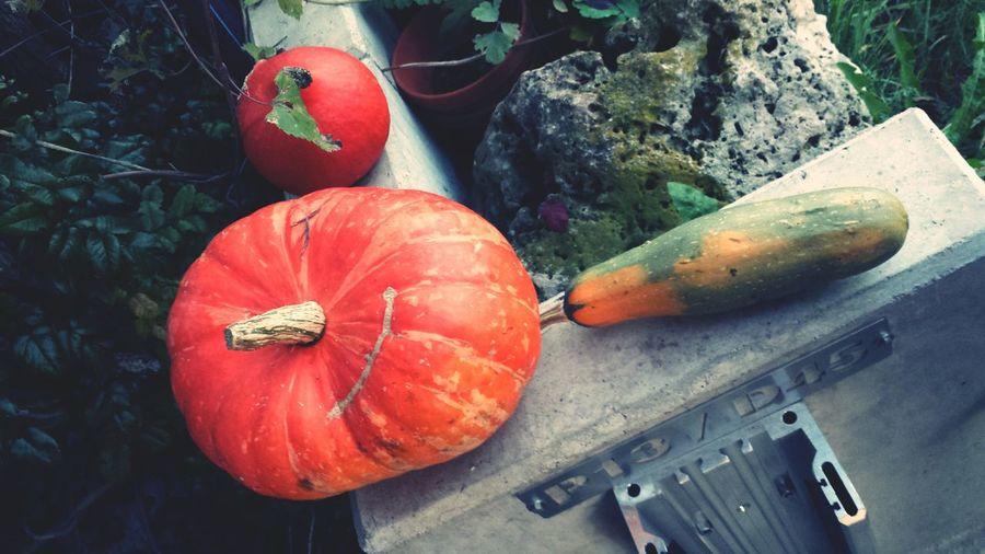High angle view of pumpkins on retaining wall