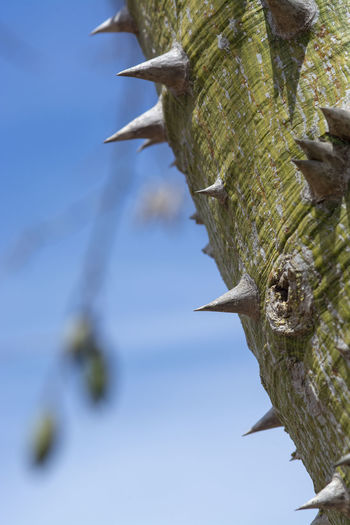 Close-up of bird on branch against sky