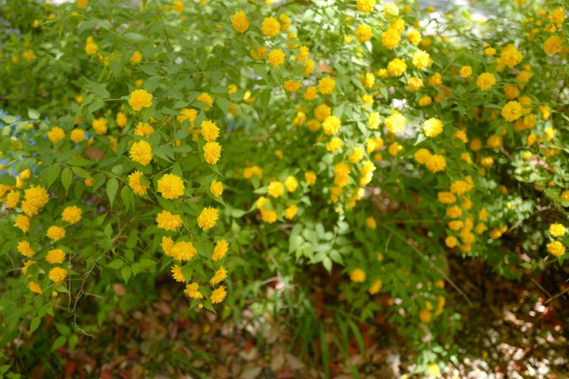 Plant Flower Flowering Plant Growth Yellow Beauty In Nature Freshness
