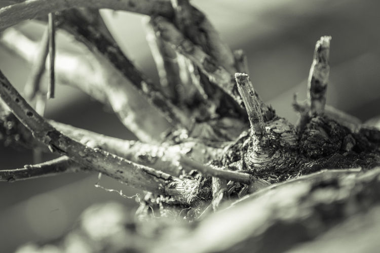 Selective Focus Close-up Nature No People Day Plant Tree Outdoors Winter Cold Temperature Snow Transportation Animal Themes Animal Animal Body Part Water One Animal Wood - Material Plant Part Focus On Foreground EyeEm Nature Collection Wallpaper Background Black And White