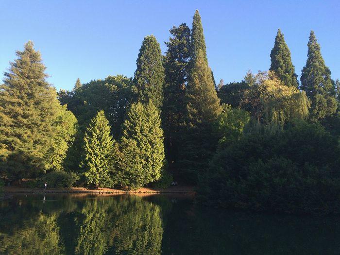 Symmetry Pond EyeEm Nature Lover Beautiful Nature Portland, OR Laurelhurst Park My Neighborhood Water Reflections