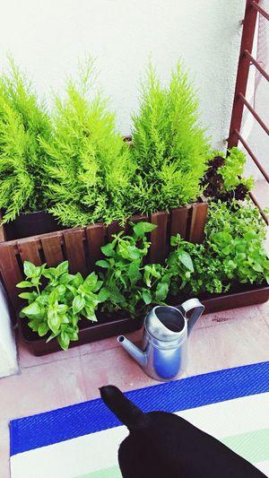 Balcony Gardening Balcony Greens DIY 🍀☀️💪