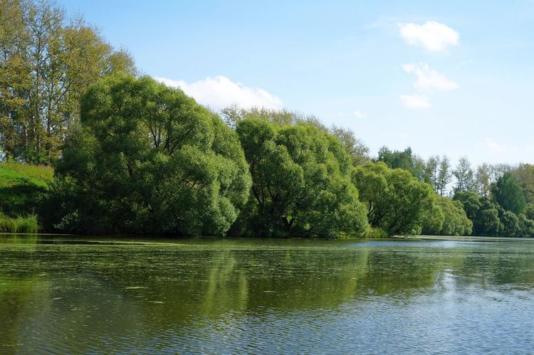 A lake near Moscow Beauty In Nature Day Forest Growth Lake Lakeshore Lakeside Beauty Landscape Nature No People Outdoors Scenics Sky Tranquil Scene Tranquility Tree Water Waterfront