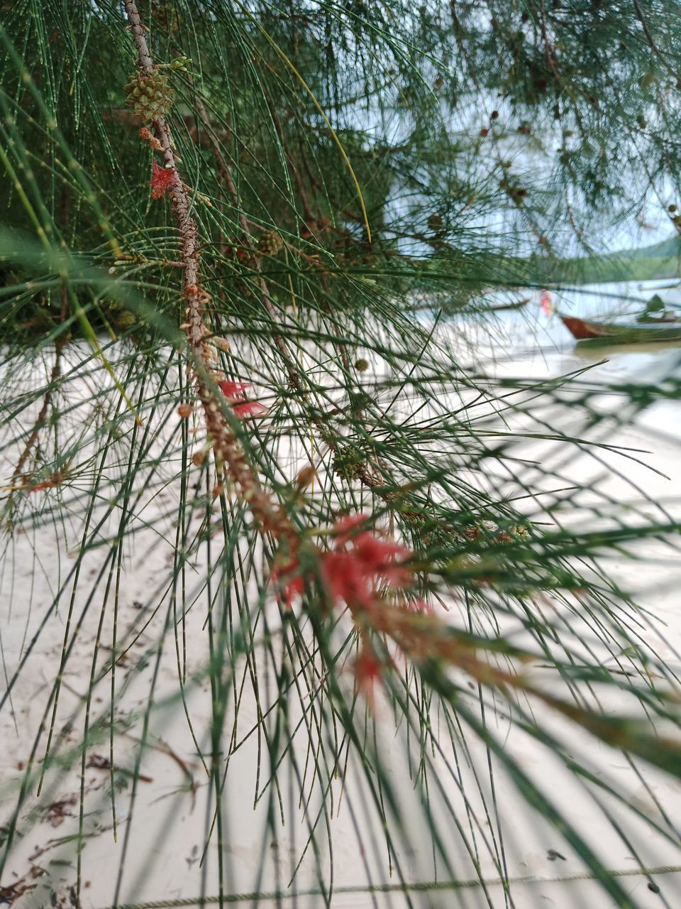 CLOSE-UP OF FLOWERING PLANT BY LAKE
