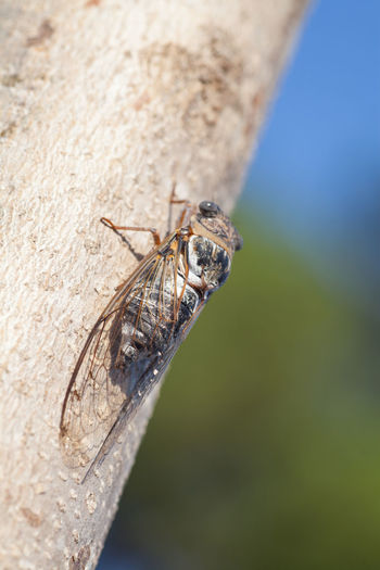 Close-up of housefly
