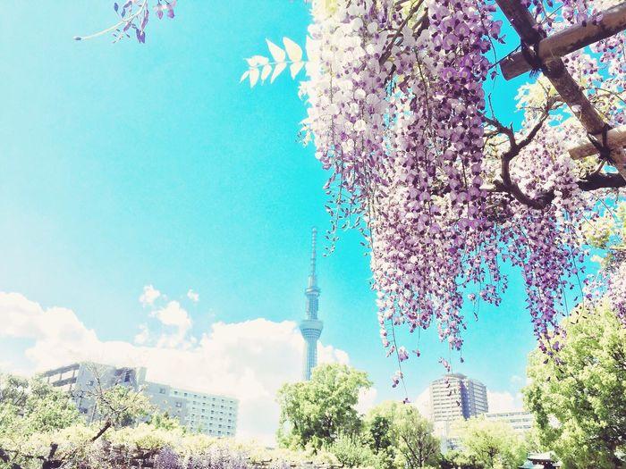 Tree Fuji