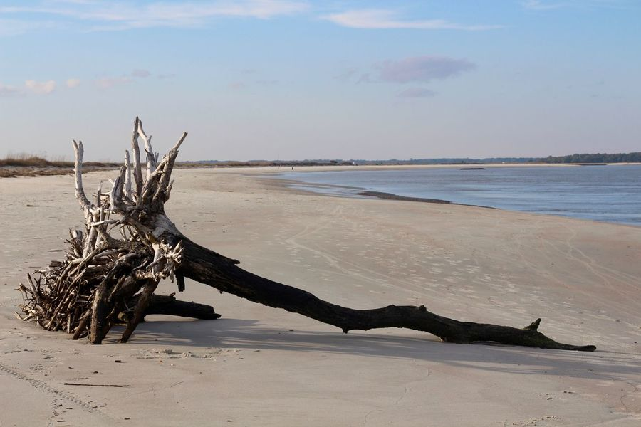 what used to be Marsh Sunny Sand Tree Fallen Tree The KIOMI Collection