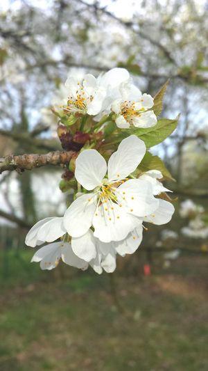 Schon wieder Blümchen Nofilter Flowers White Spring Frühling Blumenüberall