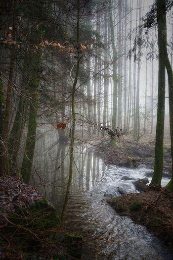 Wald mit