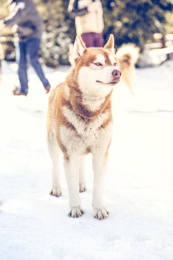 Dog walking on snow