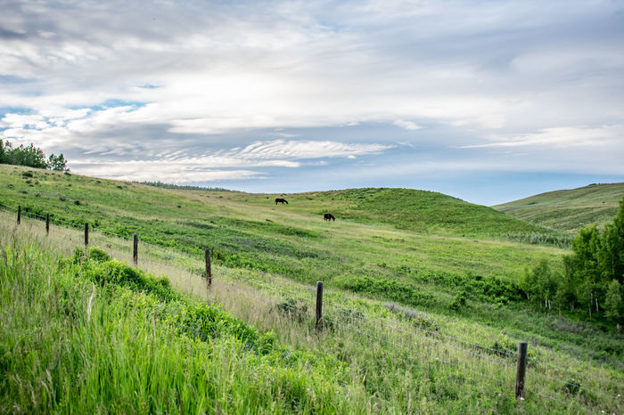 Alberta Canada Cochrane, Alberta Field Grass Green Hills Horses Landscape Landscape_Collection Nature Outdoors Sky Wide