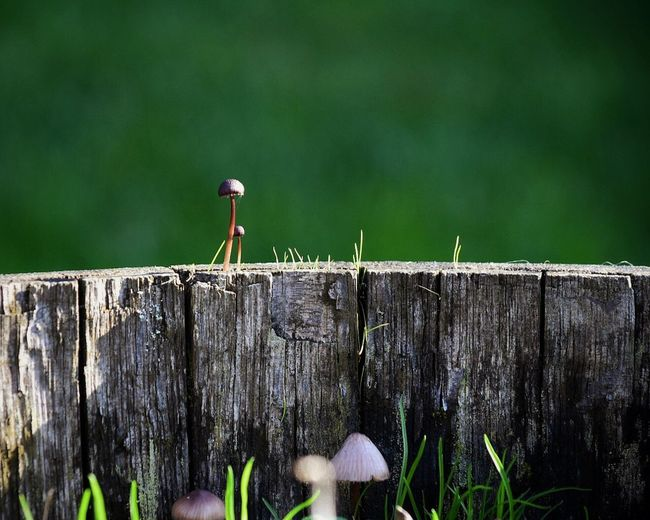 Bird Animals In The Wild Animal Themes Animal Wildlife Perching Wood - Material One Animal Outdoors Focus On Foreground Day Nature No People Backyard Backyard Photography Mushrooms Mushroom Barrel Fungus Fungi Fungus 🍄 Outdoor Photography Outside Photography Autumn Change
