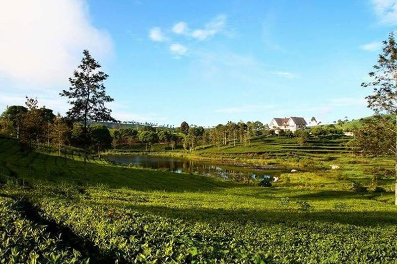 One fine morning at Cukul Cukul Pengalengan Westjava Explorewestjava Jawabarat INDONESIA Landscape Green Pesonaindonesia Wonderfulindonesia