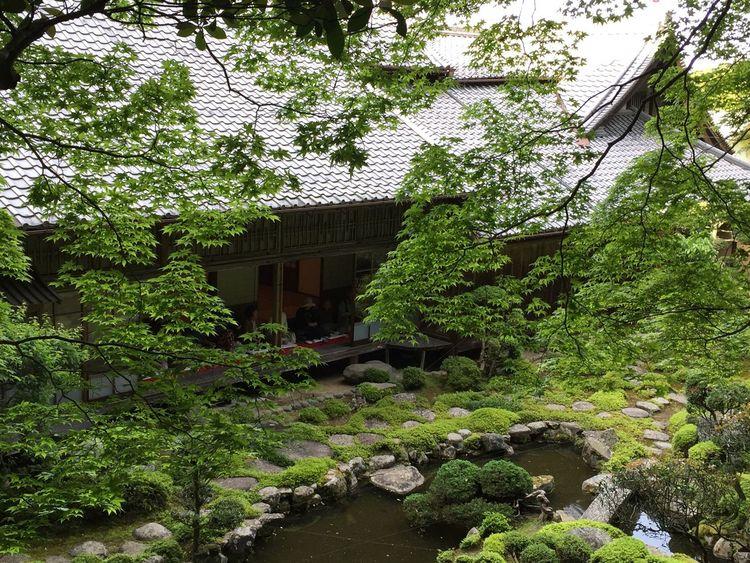 Japan ぼたん 寺 奈良 當麻寺 Japanese Temple Nara 日本庭園