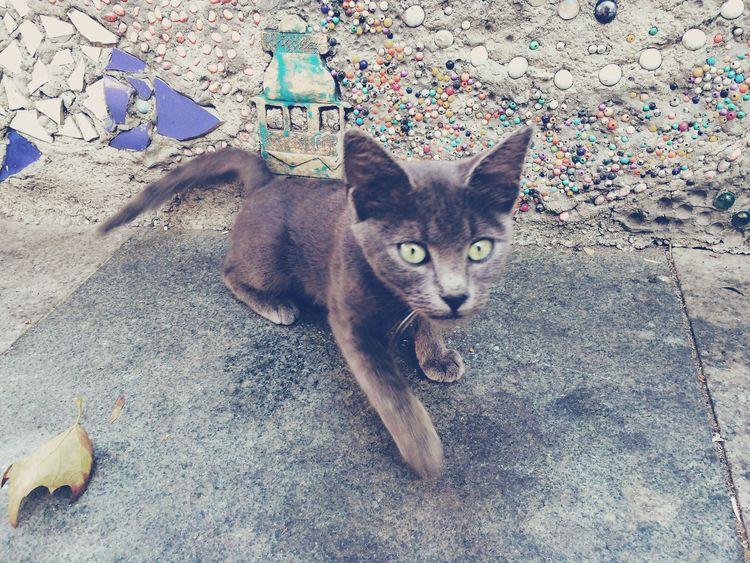 Cat Cats Cat Lovers Cat♡ Catoftheday Catsofinstagram Cats Of EyeEm Kedi Katze Kediler Kedi Aşkı Katzen Istanbul Turkey Ortaköy Kedicik Kedicik 🐈