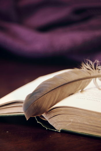 Close-up of feather in open book