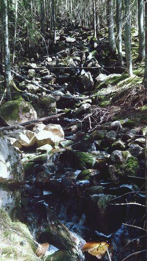 Swedenisbeautiful Waterfall Forest Fairy Tale