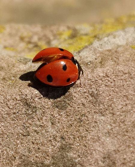 High angle view of ladybug on ground